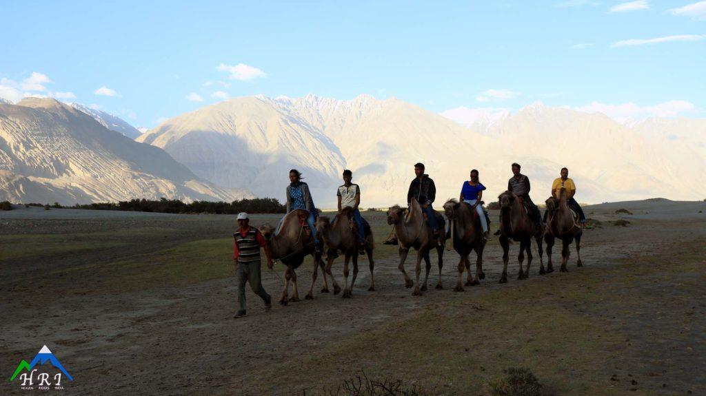 Double Hump Camel Ride in Nubra - Heaven-Riders India